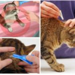 Peraturan rawatan haiwan