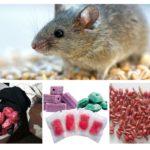Bentuk racun tikus