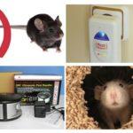 Pasang repeller dari tikus