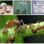 Tumbuh-tumbuhan dalam melawan serangga