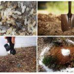 Kaedah kawalan semut