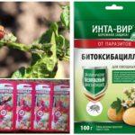 Bahan kimia untuk kemusnahan kumbang kentang Colorado