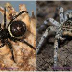 Spider Crimea